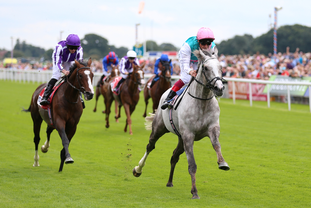 Logician Tops 11 Strong Field In The St Leger | The Winners